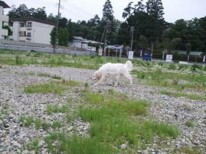 2010_05300017